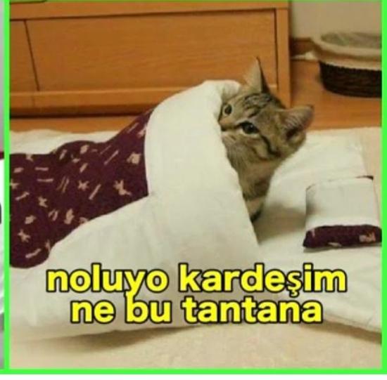 asli-bekiroglu_1971643.jpg