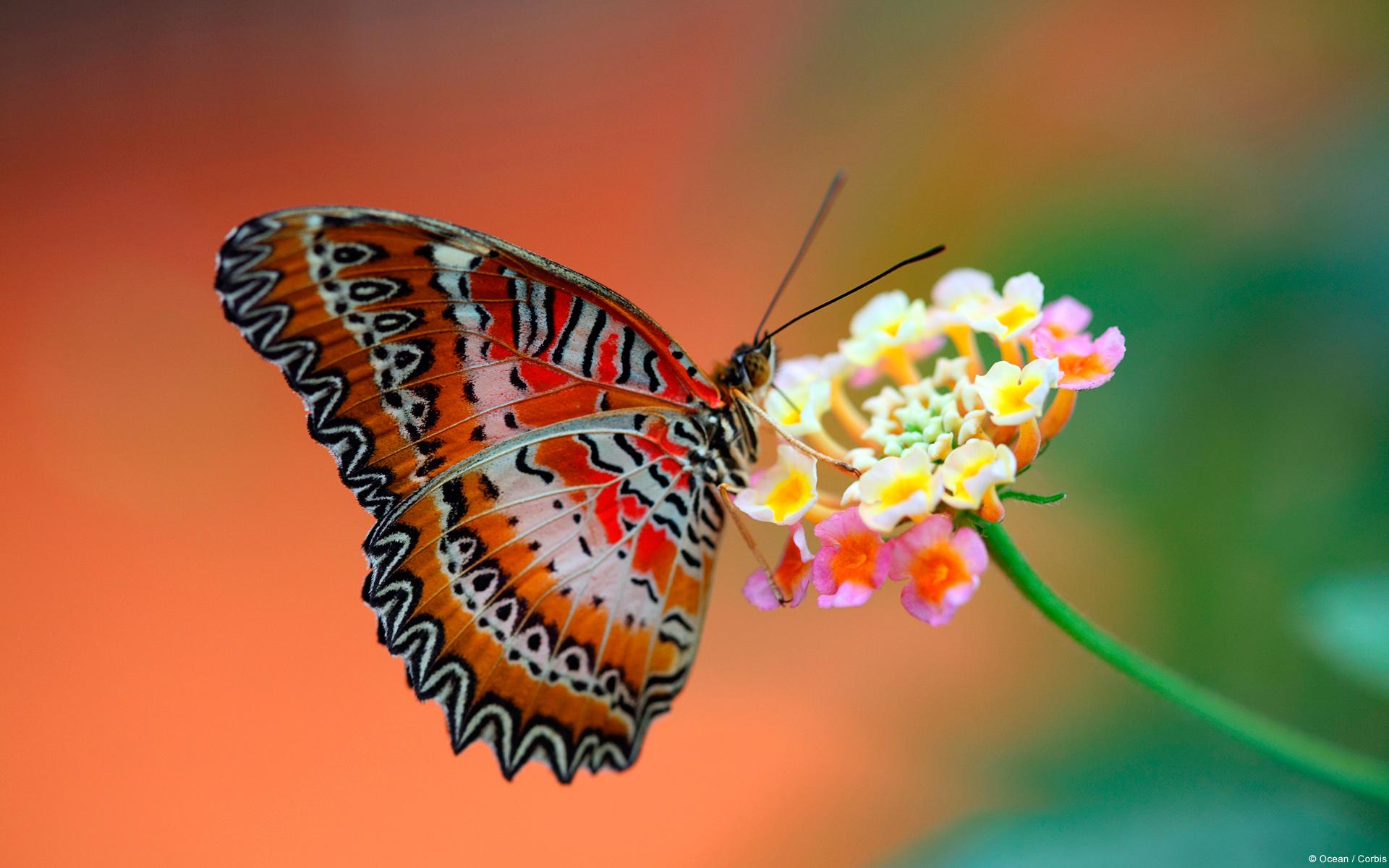 butterfly-on-flower-1 copy.jpg