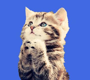 cat4 copy.jpg