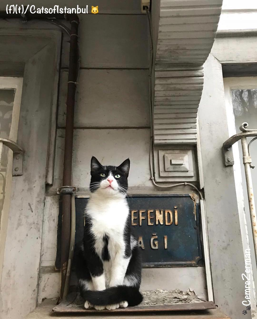 CatsofInstagram.jpg