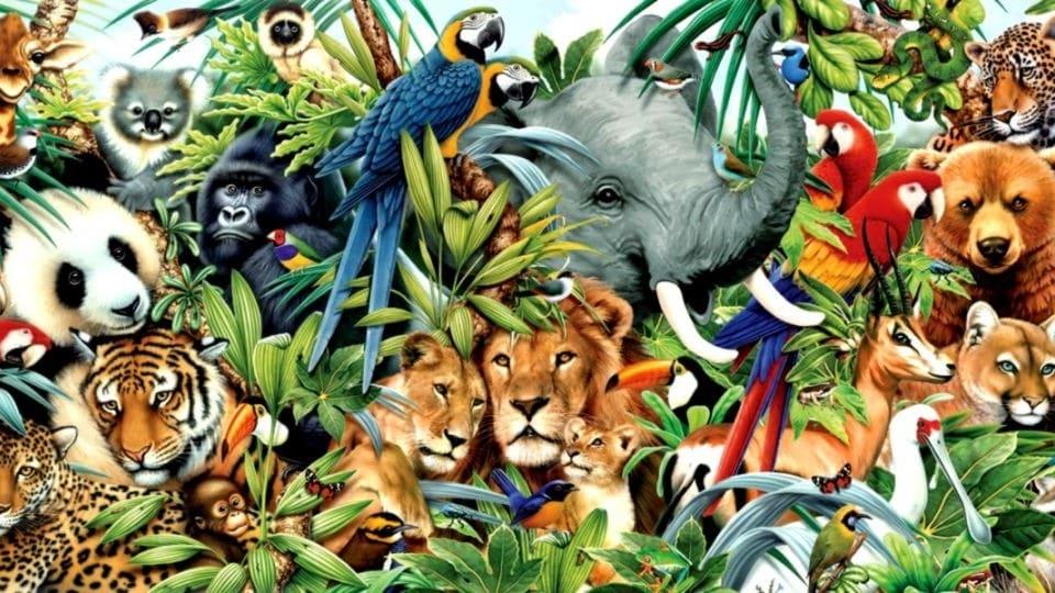 Hayvanlar-Aleminin-Enleri-1.jpg