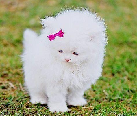 kedi.jpg